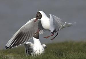 lovely-birds-couple-