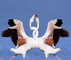 LOVELY BIRDS | MELTING ICE TOWERS
