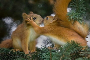 even squirrels do have such a moment