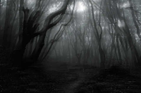 VERY DARK PART OF THE FOREST
