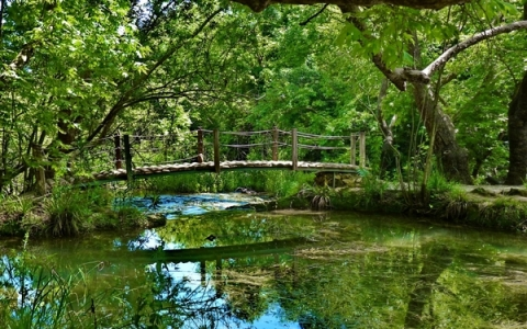 landscapes nature forest bridges streams