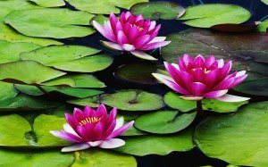 Be that lily in the ocean and make every day beautiful