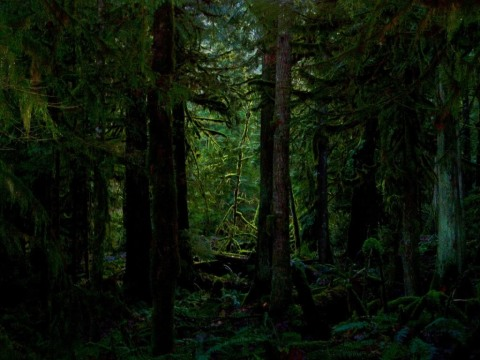 THE FOREST WAS DARK AND DEEP