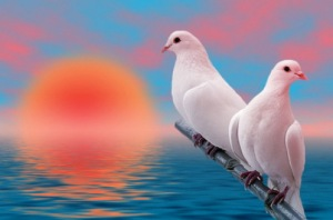 BE THAT BIRD THAT ENJOYS THE JOY THAT COMES ALONG WITH FIGHTING FOR THAT LUCRATIVE ENVIRONMENT JUST BY THE SEA